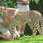 Zookeeper Salary